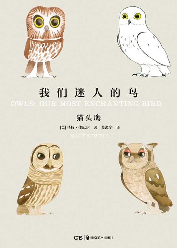 我们迷人的鸟:猫头鹰