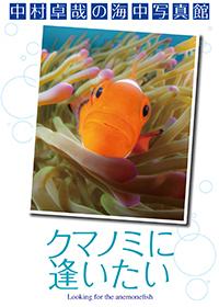 中村卓哉的海中写真馆:想见小丑鱼