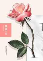 凤凰于飞第一季  上海故事