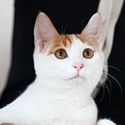 念念是只猫