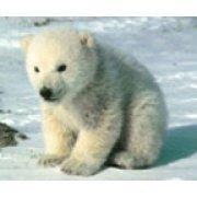 看不见雪的熊