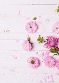 蔷薇与少年